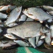 Fishing the River Parrett