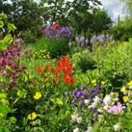 Margery Fish's Garden – East Lambrook Manor