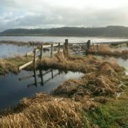 West Sedgemoor Nature Reserve