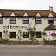 Old Barn Owl – Westport