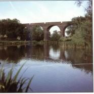 Viaduct Fisheries – Somerton