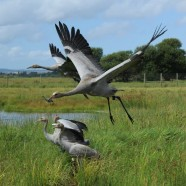 Find out when to see wildlife on the Levels and Moors